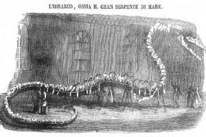 'L' idrarco, ossia il gran serpente di mare.' – dal 'Poliorama Pittoresco'. Di che animale si trattava?
