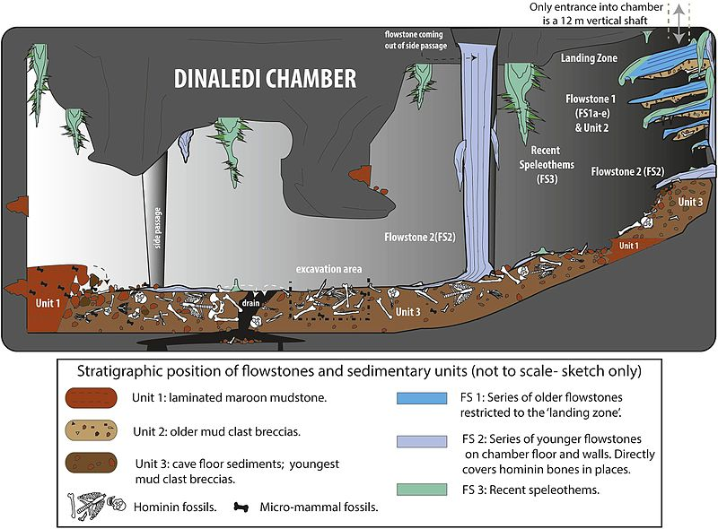 Dinaledi_Chamber_illustration