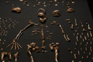 Una nuova specie per il genere Homo?