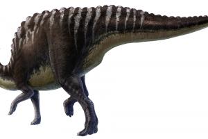 Fossili di cuccioli di Saurolophus rinvenuti in Mongolia