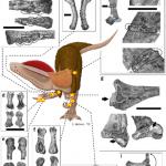 Dilophosaurus wetherilli. Disegno di Leandra Walters