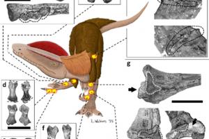 Dinosauri dall' ortopedico. Nuovi segni di tumori ossei e fratture in fossili
