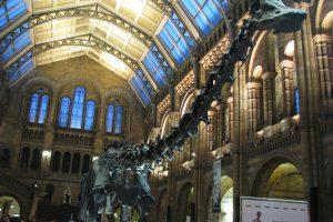 Dippy abbandona l' Hintze Hall del Natural History Museum di Londra